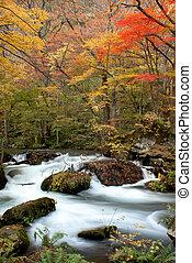 Fall of the maple season
