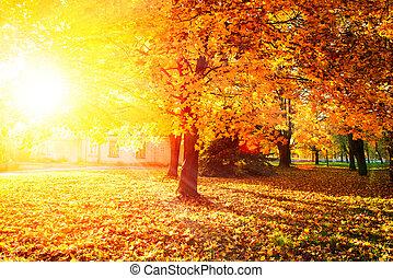 fall., otoñal, park., árboles de otoño, y, hojas
