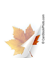 Turning page of transparent sheet of paper showing a Fall leaf