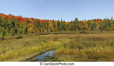 fall panorama in algonquin park