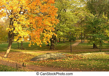 Fall Park - The autumn park