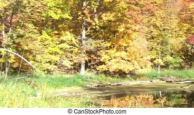 Fall Pond in Sun