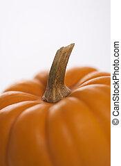 Fall pumpkin.