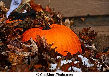 Fall pumpkin in leaves