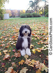 4months old puppy sitting by the tree surrounded by beautiful autumnleaves