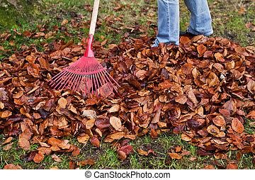 fall., râteau, jardinage, leaves.