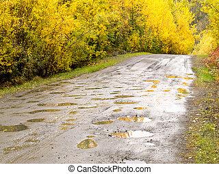 Fall rain on rural dirt road thru yellow willows
