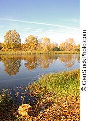 Fall River golden leaves