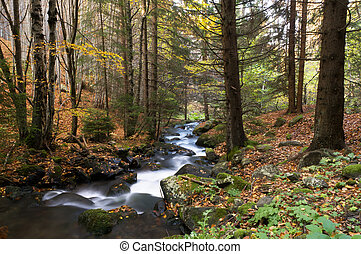 Fall River - Beautiful autumn forest with a river in...