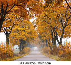 Fall road. - Autumn - road with colorful, vibrant maple...