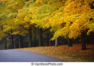 Fall road with colorful trees