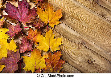 Fall rustic background with maple leaves, copy space
