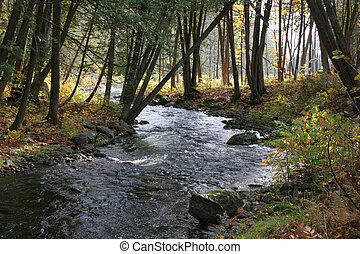 Autumn woods and stream