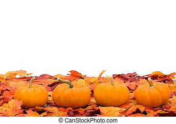 Fall Scene - Fall coloured leaves with a pumpkin isolated on...