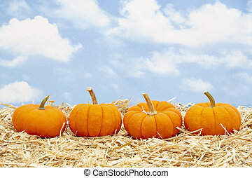 Fall scene with orange pumpkins on straw hay with sky background
