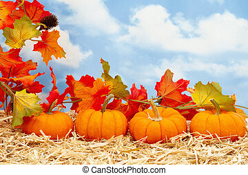 Fall scene with orange pumpkins with fall leaves on straw hay with sky