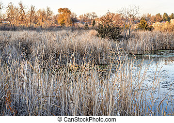 fall scenery of wetlands - fall scenery in one of natural ...