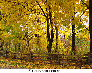 Fall Scenery - Yellow leaves on a forest of trees with a...