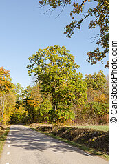 Fall season by a country road
