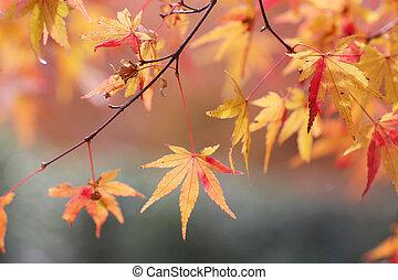 fall season garden at Seiryuden Japanese kyoto