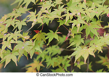 fall season garden at Seiryuden Japanese  temple
