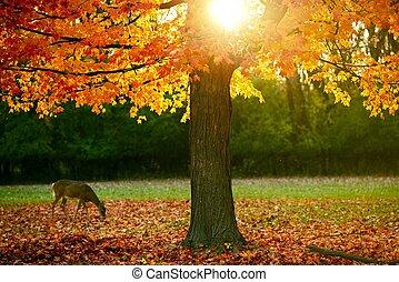 Fall Season in the Park. Orange-Reddish Leaves on Tree and...