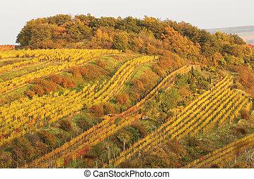 fall season in vineyard