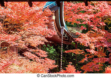 fall season , Japan - Kyoto, Japan - November 23, 2013: ...