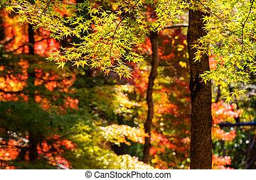fall season , Japan