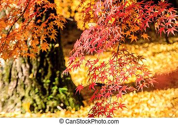fall season of kyoto, Japan