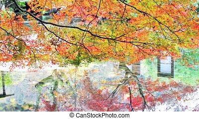 fall season of kyoto, Japan - Kyoto, Japan - November 26, ...