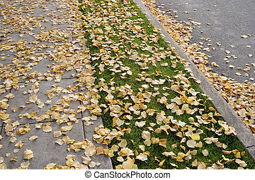 Fall Sidewalk - A sidewalk, nature strip, curb, and street -...
