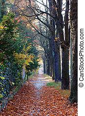 Fall Sidewalk in Berlin
