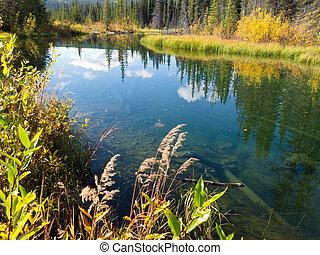 Fall sky mirrored on calm clear taiga wetland pond - Sky...