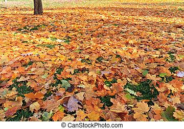 fall leafs