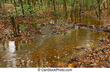 Fall stream in the woods