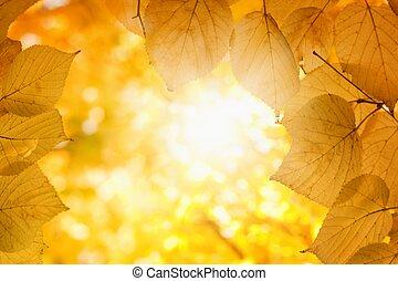 Fall background - orange leaves, bright sunlight