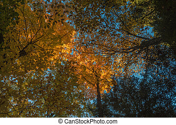 Fall sunny forest