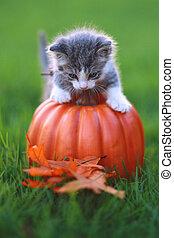 Fall Themed Kitten Image - Kitten in the Grass With Pumpkin