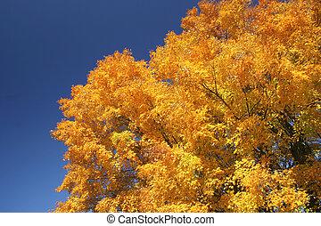 Fall tree colors