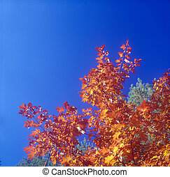 Fall trees against the blue sky.