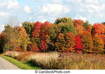 Fall colored trees and grasses along a country road against a blue sky