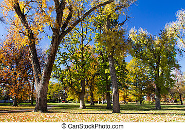 Fall Trees in City Park - Denver, Colorado