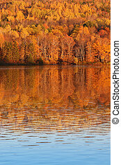 Fall trees in New Brunswick Canada - Beautiful and colorful...