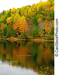 Fall trees reflect in River