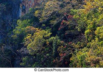 Fall tropical colors