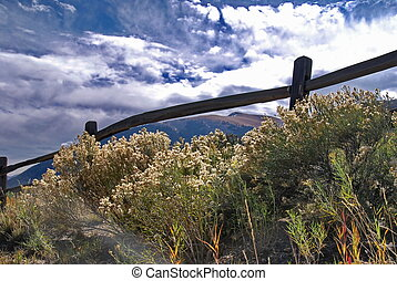 Fall Wildflowers in the Rockies