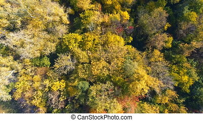 Fall Wood from above. Landscape. Aerial clip - Wood from...