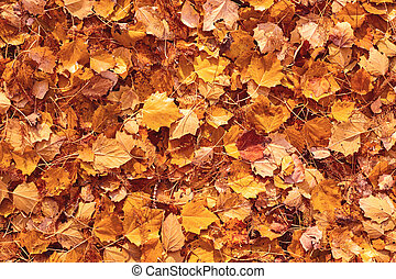 fall yellow and orange leaves background