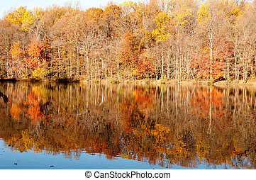 Fall Yellow Foliage Forest with the Reflection in the Lake